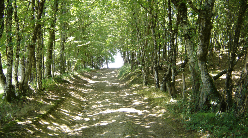 Chemin de randonnée rouffiac cantal