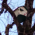 cabane à oiseau rouffiac - cantal